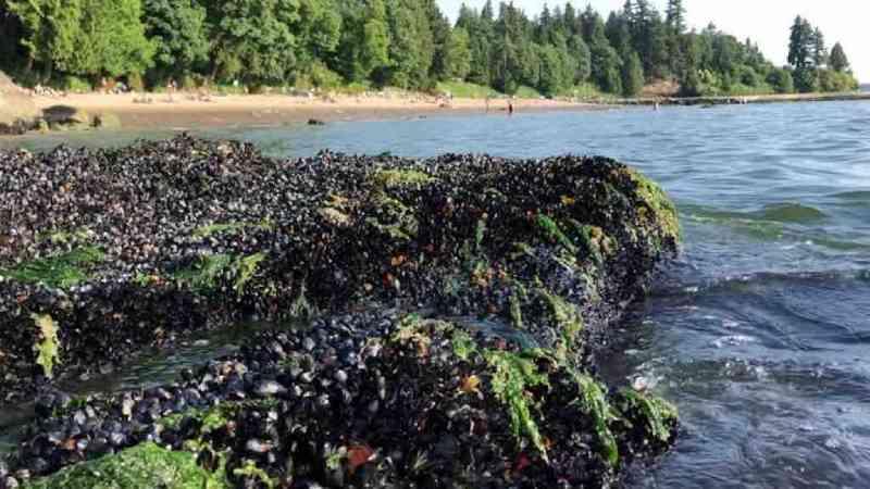 Canadá: calor pode ter matado bilhões de animais marinhos