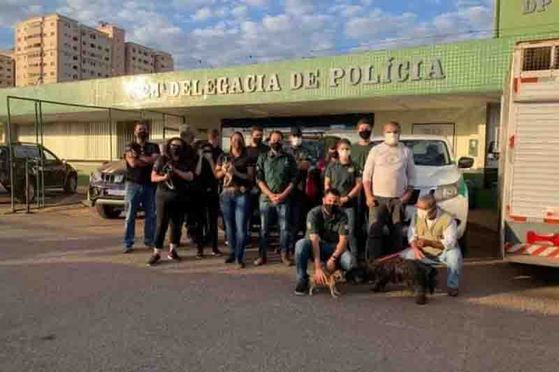Em ação contra maus-tratos, sete animais são resgatados e uma pessoa é presa no DF