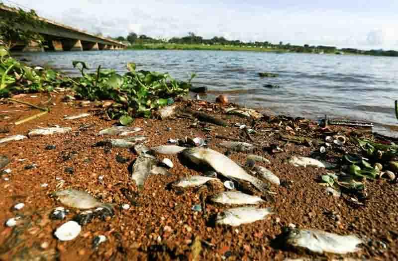 Ibram descarta esgoto como causa da morte de animais no Lago Paranoá, em Brasília