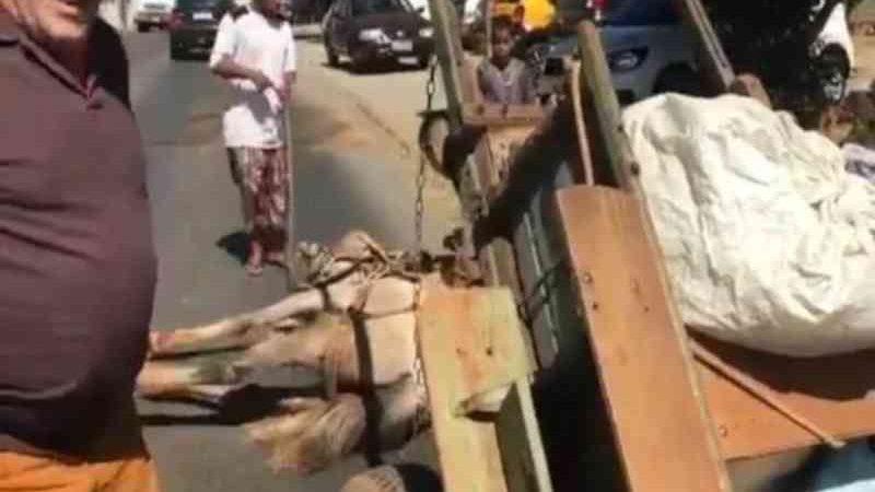 Mesmo caído e exausto, cavalo é arrastado por homem em carroça no DF; vídeo