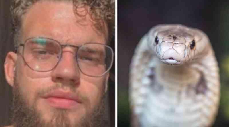 Caso naja: um ano após ataque de serpente e polêmica envolvendo tráfico de animais no DF, processo não foi julgado