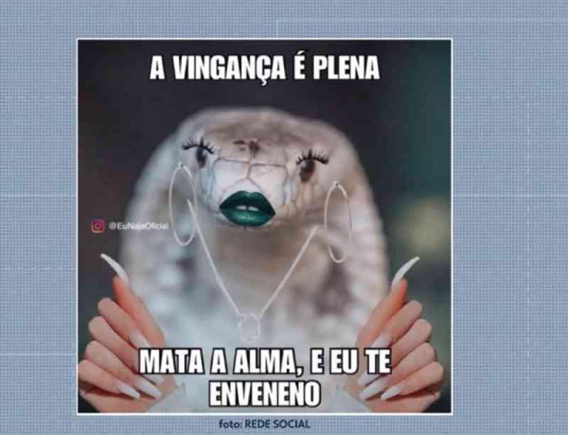 Naja que picou estudante de medicina veterinária viralizou nas redes sociais — Foto: TV Globo/Reprodução