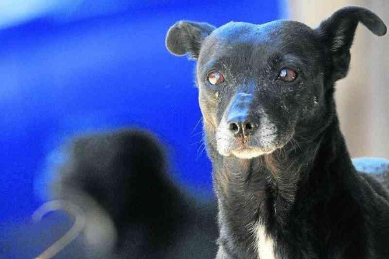 Protetores de animais no DF se mobilizam por doações para animais de rua