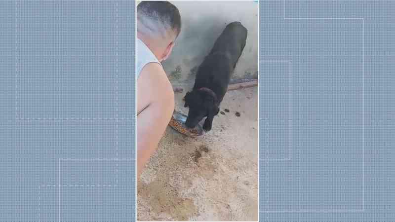 Homem invade casa para socorrer dois cachorros vítimas de maus tratos, no DF — Foto: TV Globo/Reprodução