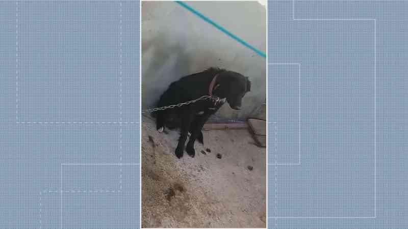 Cachorro vítima de maus tratos, no DF — Foto: Tv Globo/Reprodução