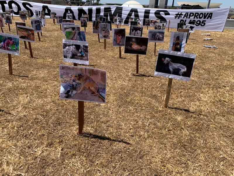 Protetores de animais fazem ato em frente ao Congresso Nacional contra maus-tratos a cães e gatos — Foto: Brenda Ortiz/G1 DF