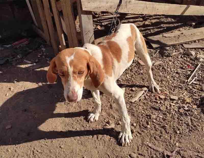 Homem é preso por maus-tratos contra cão usado em caçadas, em Itapemirim, ES