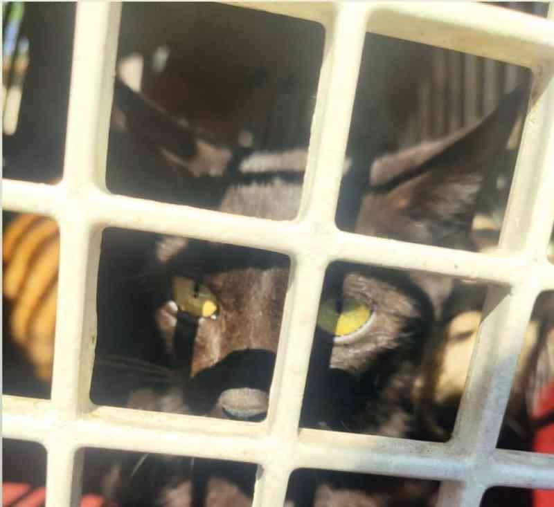 Gato foi resgatado após denúncias — Foto: Divulgação/Janete de Sá