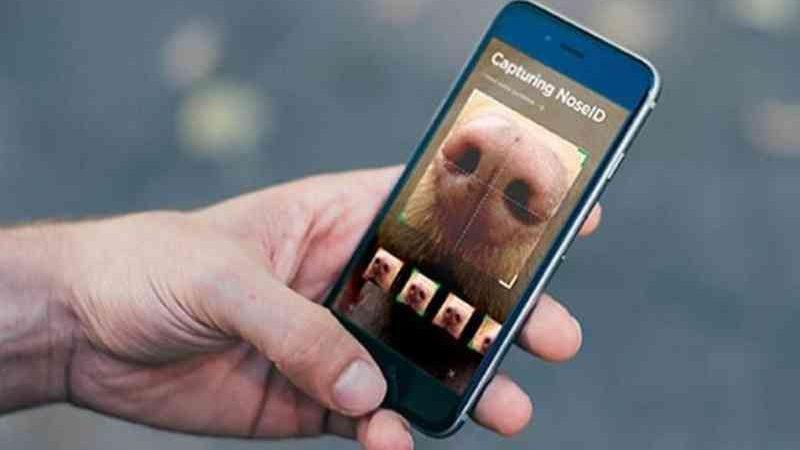 Aplicativo utiliza a captura da câmera para ler as rugas presentes no focinho dos cães, que são únicas (Foto: Divulgação/NOSEiD)