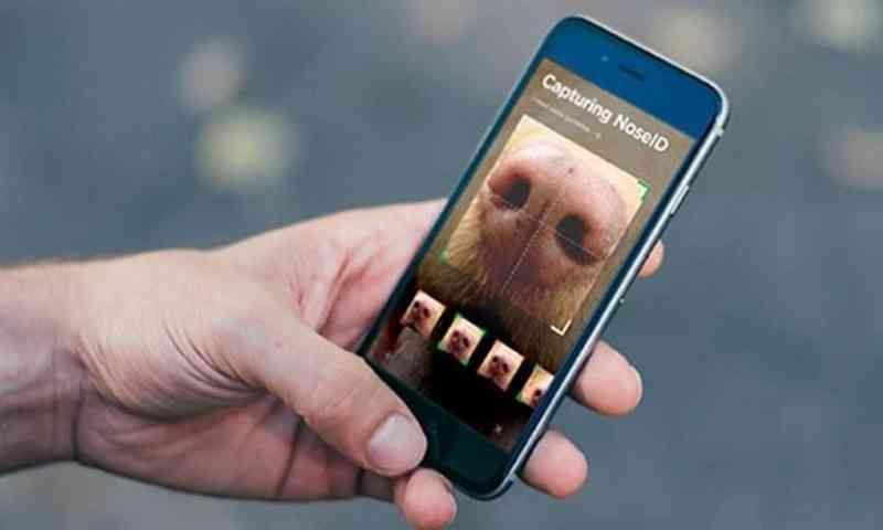 Aplicativo permite escanear o nariz de cães perdidos para encontrar seus tutores nos EUA