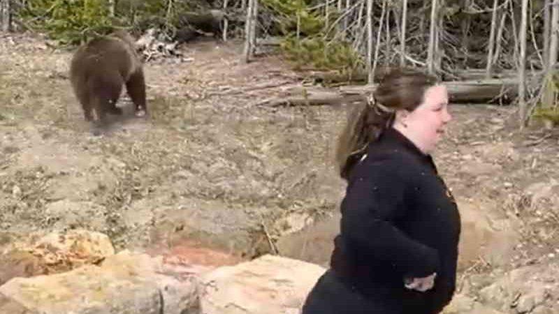 Samantha Dehring é afugentada por urso em parque dos EUA. — Foto: Darcie Addington/Instagram