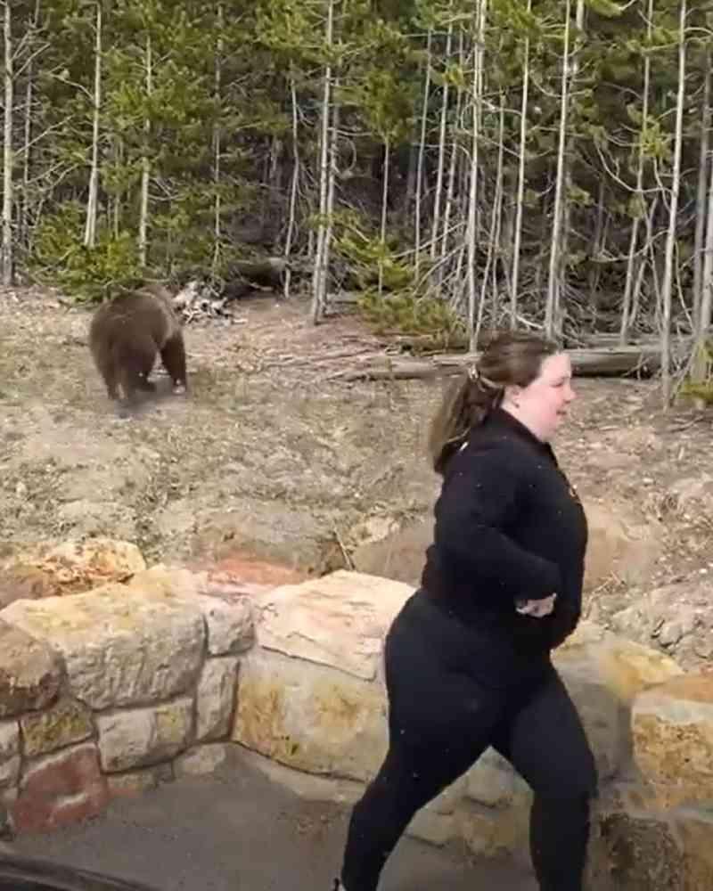 Mulher é processada por perturbar a vida selvagem nos EUA após ser gravada com ursos em parque; veja vídeo
