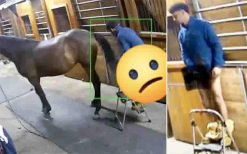 Jovem é acusado estuprar um cavalo após invadir um estábulo em Norfolk, EUA