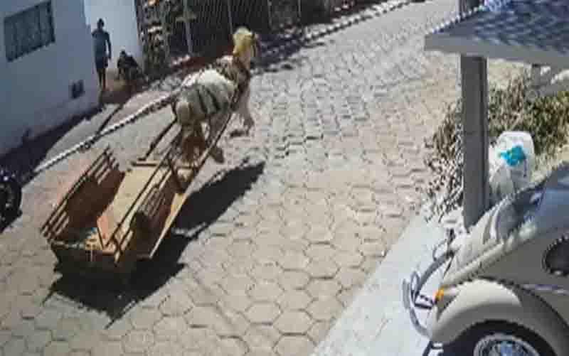PM 'persegue' cavalo em carroça que corria por ruas de Inhumas, GO; vídeo