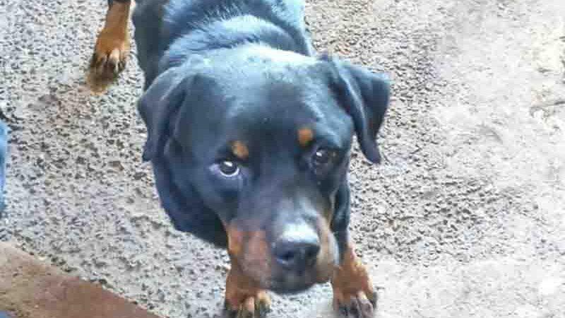 Ao todo, 16 cachorros foram capturados no local. Foto: PCGO