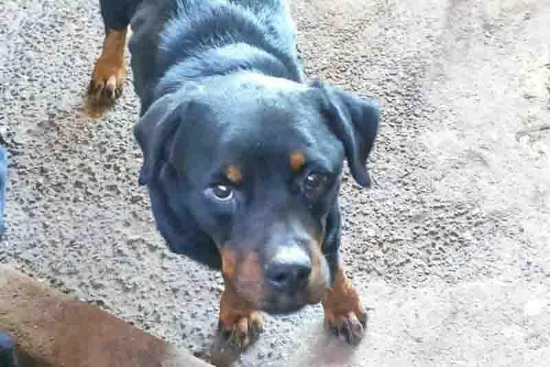 Maus-tratos: cães eram mantidos sem água e comida em criadouro de GO