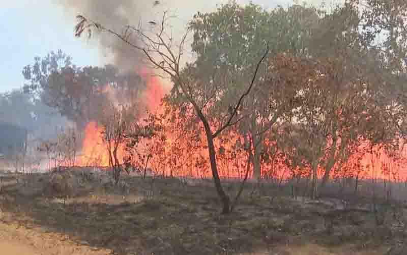 Incêndio no Parque Nacional das Emas em Goiás. Foto: Reprodução/TV Anhanguera