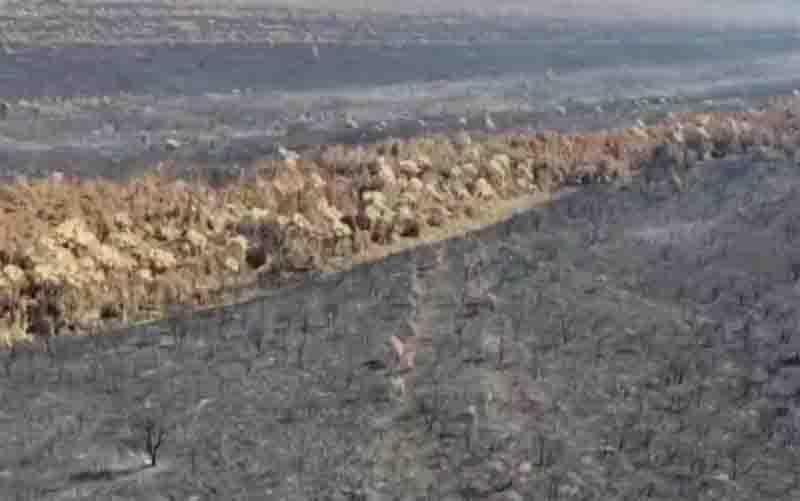 Imagens de drone mostram que foram queimados 20% da vegetação do Parque Nacional das Emas, em Goiás. Foto: Reprodução/TV Anhanguera