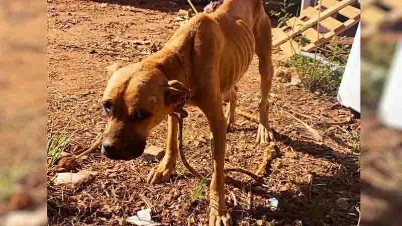 11 animais são encontrados em situação de maus-tratos em Goiânia. Foto: Divulgação/Romu