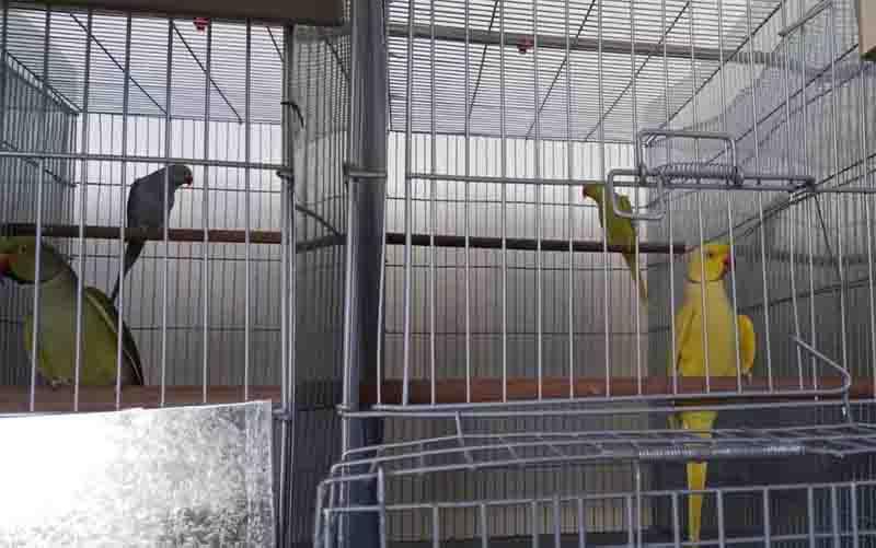 Polícia encontra mais de 70 pássaros exóticos engaiolados dentro de galpão em Goiânia, GO; vídeo