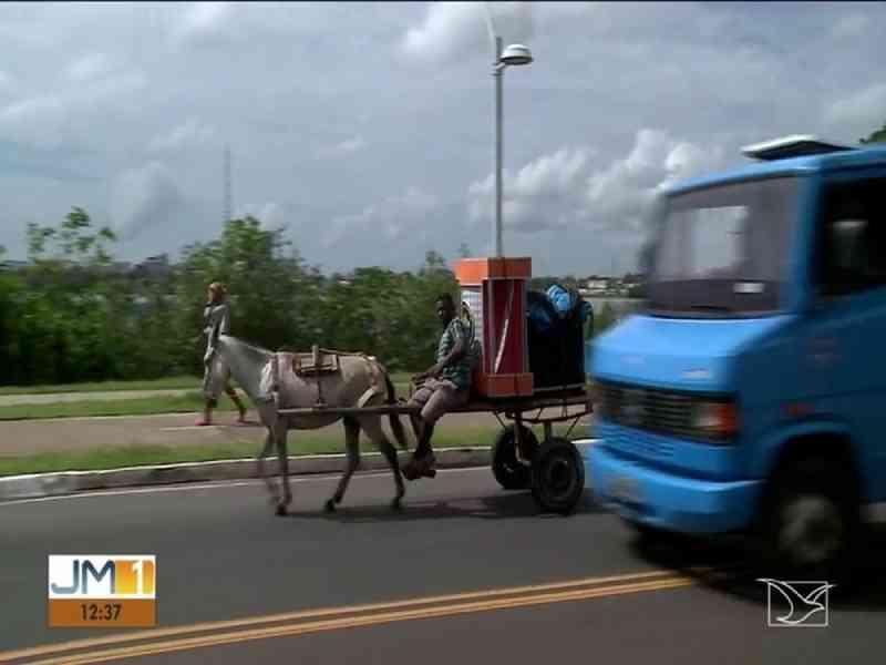 Animais são usados em veículos que têm tração em São Luís — Foto: Reprodução/TV Mirante