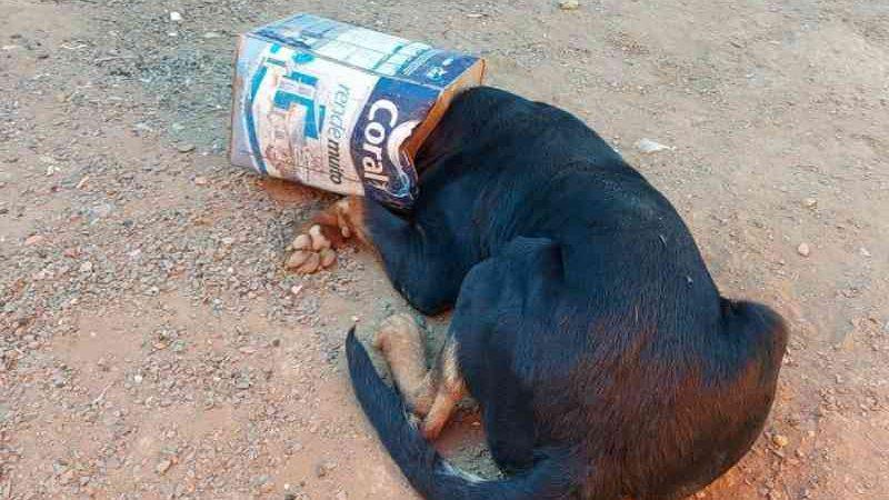 Rottweiler ficou com a cabeça presa em uma lata de tinta vazia em Araguari — Foto: Corpo de Bombeiros/ Divulgação