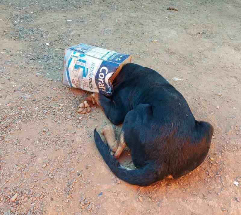 Rottweiler fica com cabeça presa em lata de tinta vazia em Araguari, MG