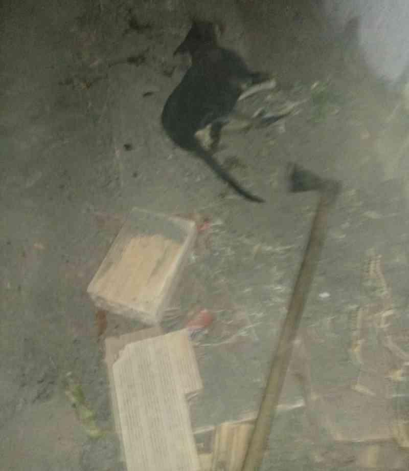 Homem é preso após matar cachorra com machadadas por ter comido peixe, em Ibiaí, MG