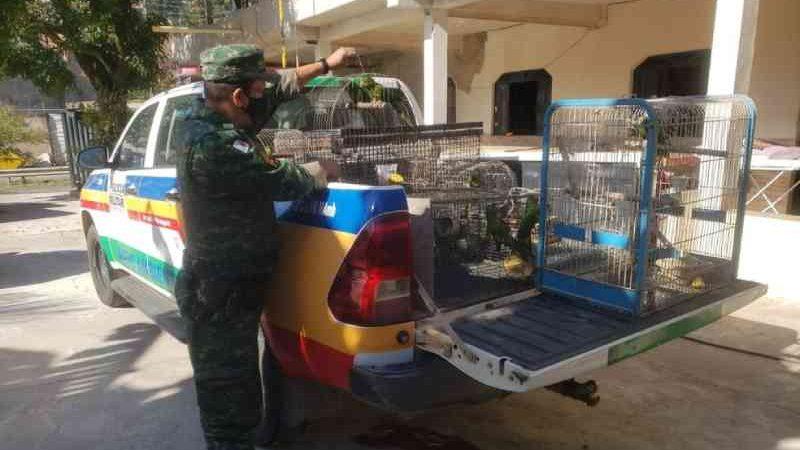 Dez aves e 12 jabutis foram resgatados de cativeiro no bairro Esperança — Foto: Polícia Militar de Meio Ambiente/Divulgação