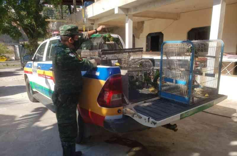 Homem é preso por tráfico de animais silvestres em Ipatinga, MG
