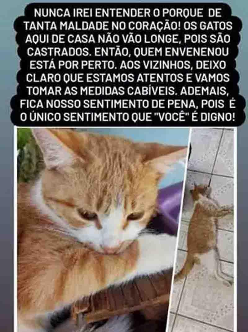 Mais um gato foi encontrado envenenado nesta terça-feira em Piracema. Foto: Reprodução/Redes sociais