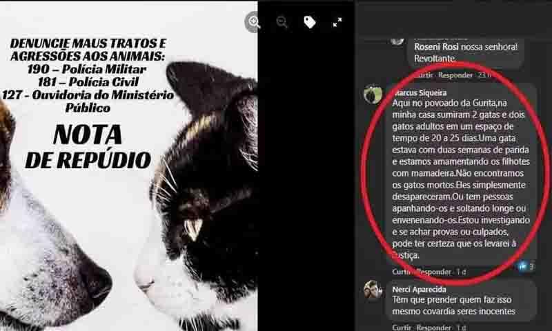 População de Piracema está revoltada com os assassinatos de animais. Foto: Reprodução/Redes sociais