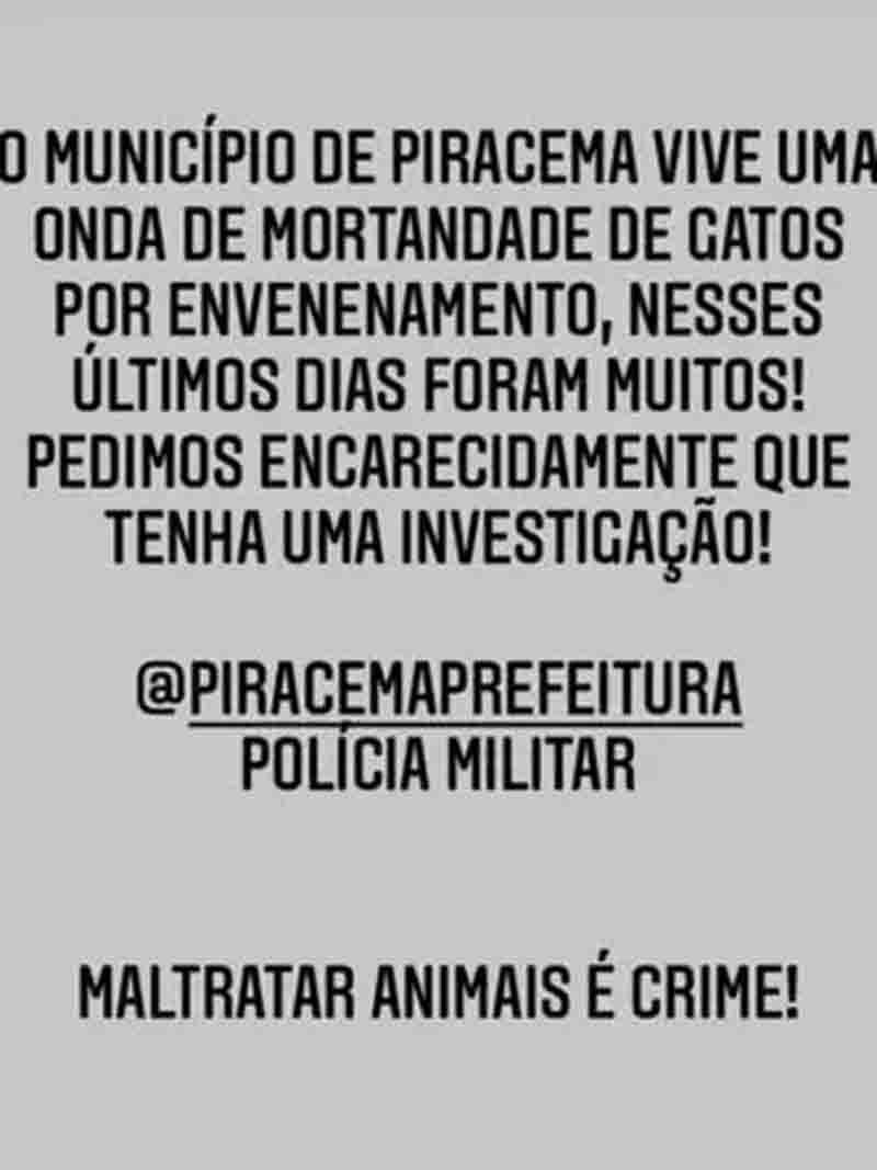 Ong Proteção Animal Piracema denuncia a matança dos animais. Foto: Reprodução/Redes sociais