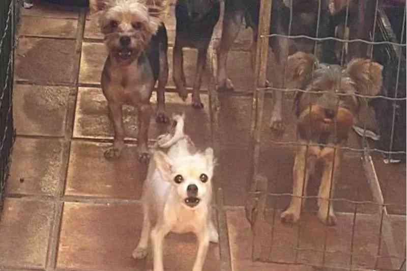 Idosa suspeita de cometer maus-tratos contra cães é presa em Uberlândia, MG