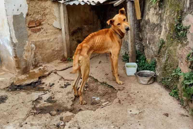 Cachorro vítima de maus-tratos é resgatado em condições insalubres em Juiz de Fora, MG