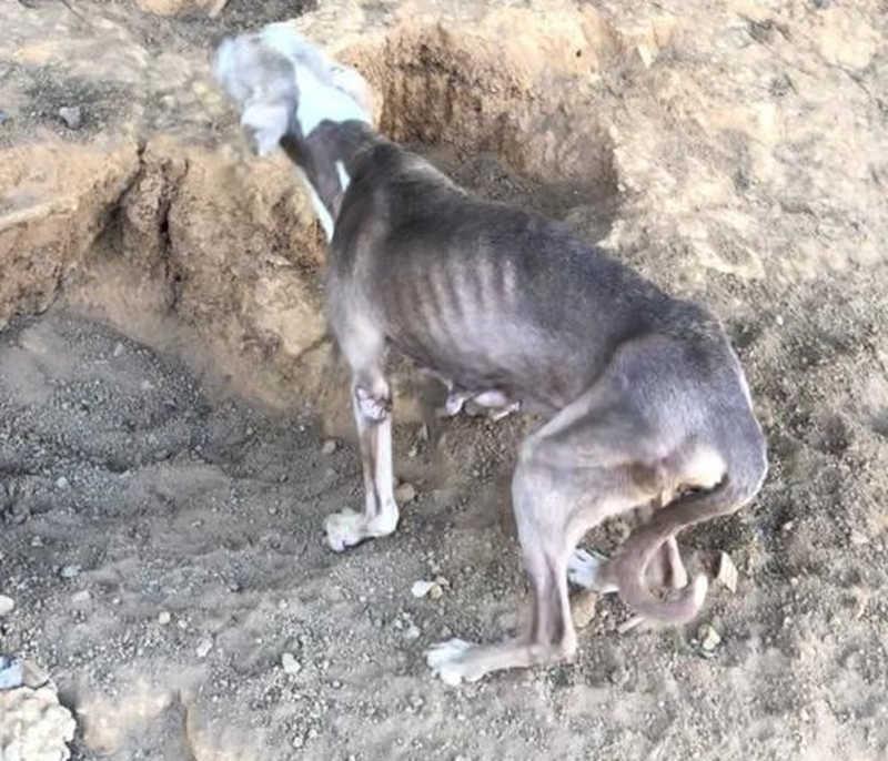 14 cães são encontrados com sinais de maus-tratos em Cataguases, MG