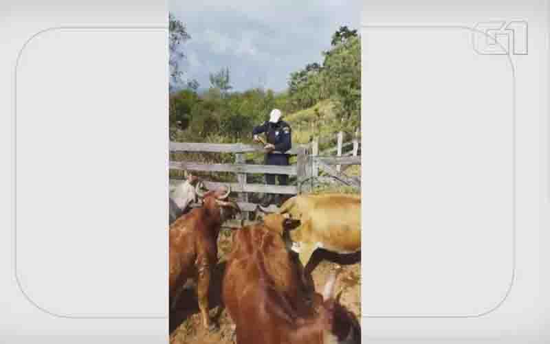 Prefeitura investiga supostos disparos de armas de choque em vacas por guardas municipais em de Itajubá, MG; VÍDEO