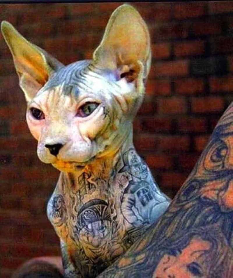 Lei que define multa de até R$ 30 mil para quem tatuar animais é sancionada em Juiz de Fora, MG