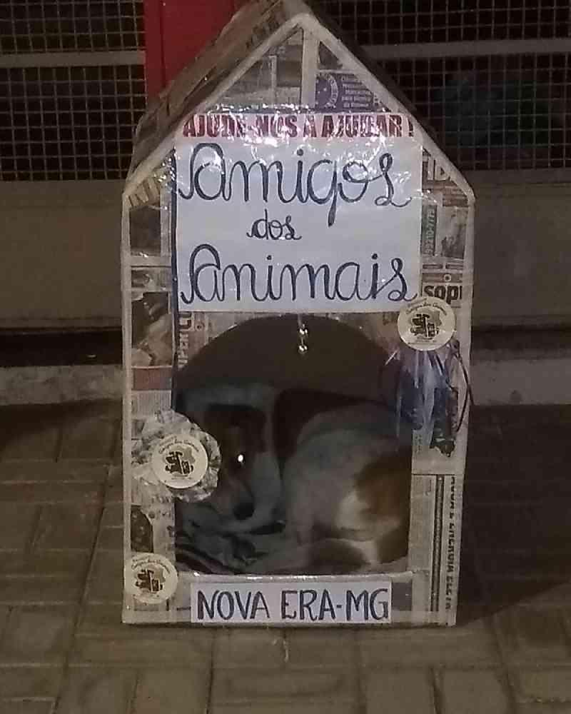 Moradores de Nova Era, na região central de MG, 'fabricam' casas de papelão para animais de rua