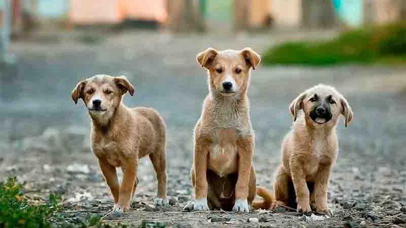 Montante será destinado a castração de cães e gatos — Foto: Banco de imagens. Pixabay/Foto
