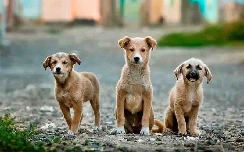 Vereadores aprovam mais de R$ 182 mil para castração de cães e gatos em situação de rua ou em abrigos em Uberlândia, MG