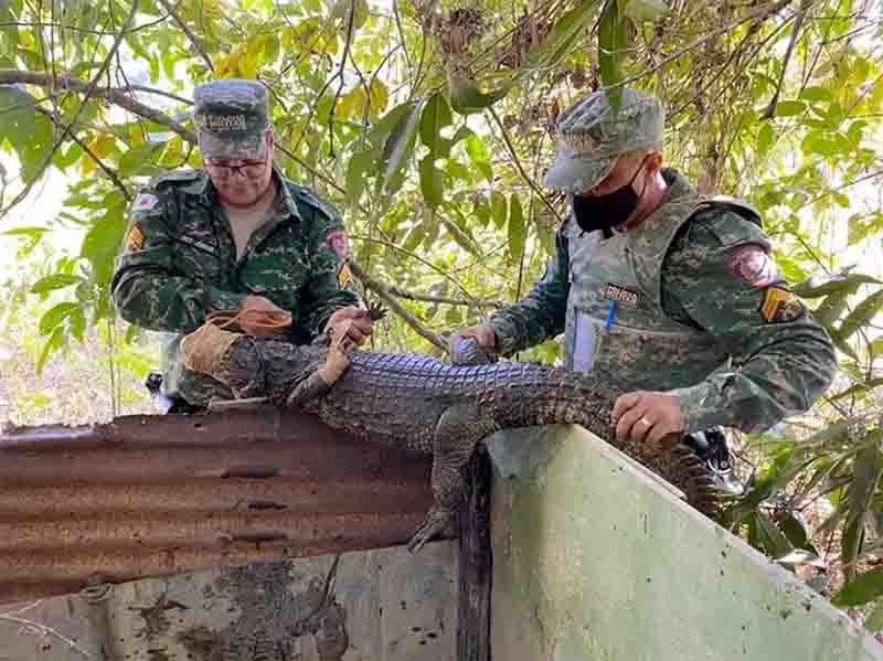 Irmãos que mantinham jacarés em cativeiro são presos no Vale do Rio Doce