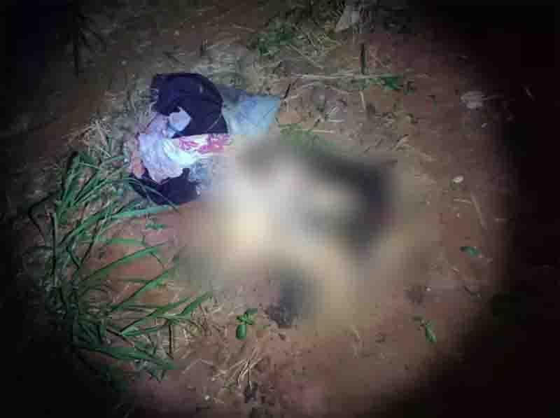 Polícia procura homem suspeito de matar cachorros a pauladas em Bataguassu, MS
