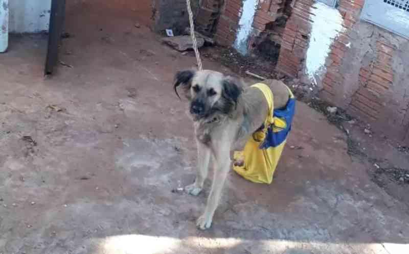 Tutora de 3 cães deixados amarrados, sem comida e no frio passa a noite na cadeia, em Campo Grande, MS