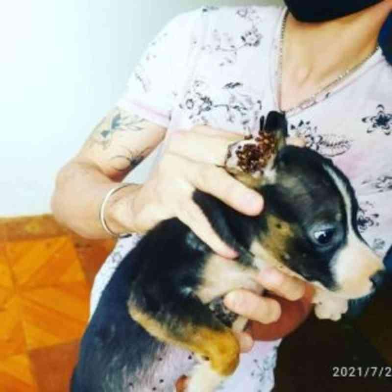 Tutor é preso em flagrante por maus-tratos e 12 animais são resgatados em Campo Grande, MS