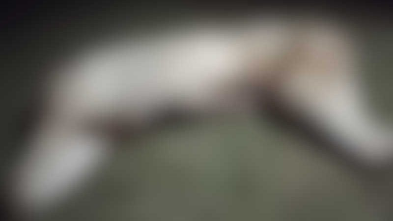 Animal foi encontrado dentro de uma caixa por uma moradora. (Fotos e vídeo: GCMFRON)