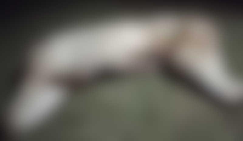 Em Ponta Porã (MS), cachorro tem cabeça e patas arrancadas em possível ritual; imagens fortes