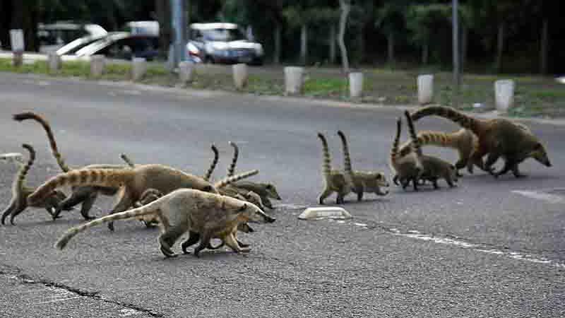 Estrada Viva: Seinfra, UEMS e Ong's se unem para mitigação de morte de animais nas rodovias de MS