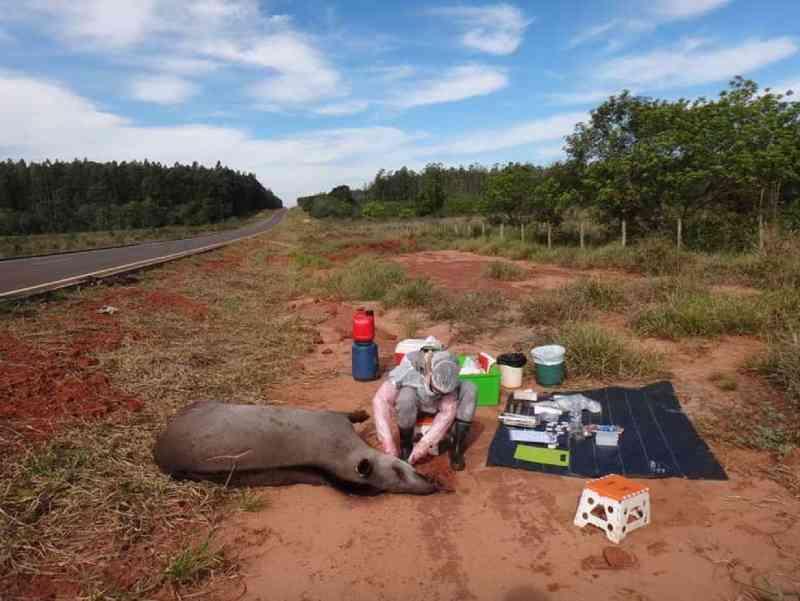 Antas estão morrendo e sendo afetadas por agrotóxicos utilizados no Cerrado de MS, aponta pesquisa