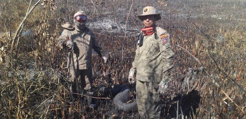 Militares estão há 4 dias combatendo fogo em cidade turística e encontraram vários animais mortos — Foto: Corpo de Bombeiros/Divulgação